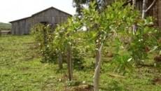 Projeto Quintais Orgânicos incentiva criação de pomares comerciais, gerando renda para produtores