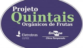 Projeto Quintais Orgânicos de Frutas completa onze anos de existência.