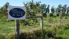 Projeto Quintais Orgânicos de Frutas vai contemplar pedritenses