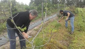 Projeto Quintais realiza poda na Região da Fronteira