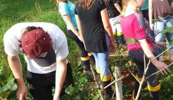 Quintal implantado no IFFar – Campus Santo Augusto produz frutos