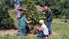 Projeto Quintais Orgânicos de Frutas está presente nas escolas da região