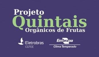 Embrapa implantará no RS 500 quintais orgânicos de frutas