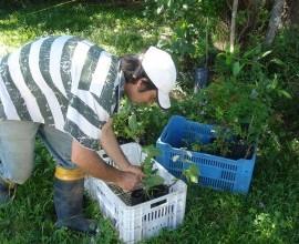 Equipe Técnica vistoria Quintais Orgânicos em Pinheiro Machado
